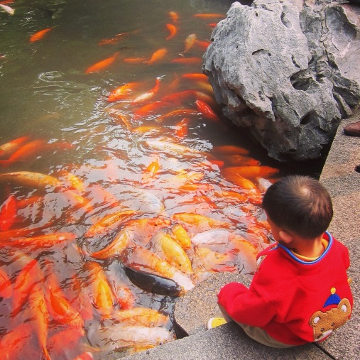 Little boy playing with fish at Shanghai's Yuyuan Gardens