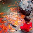 A small boy feeds the fish at Yu Gardens, Shanghai, November 2014 © Cas Sutherland