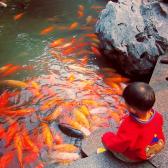 A small boy feeds the fish at Yu Gardens, Shanghai, November 2014 © Cas Sutherland